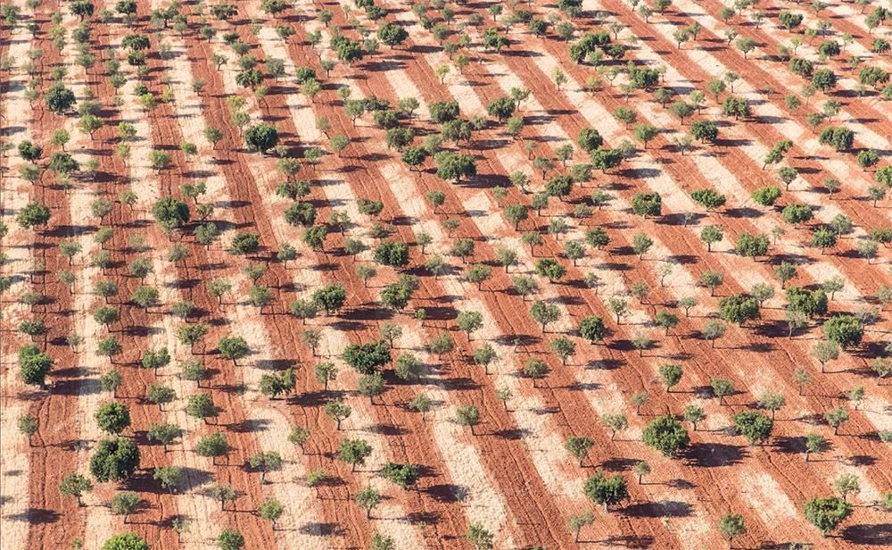 Mandelbäume und Mallorcas rote Erde in der Nähe von Marratxí im Landesinneren