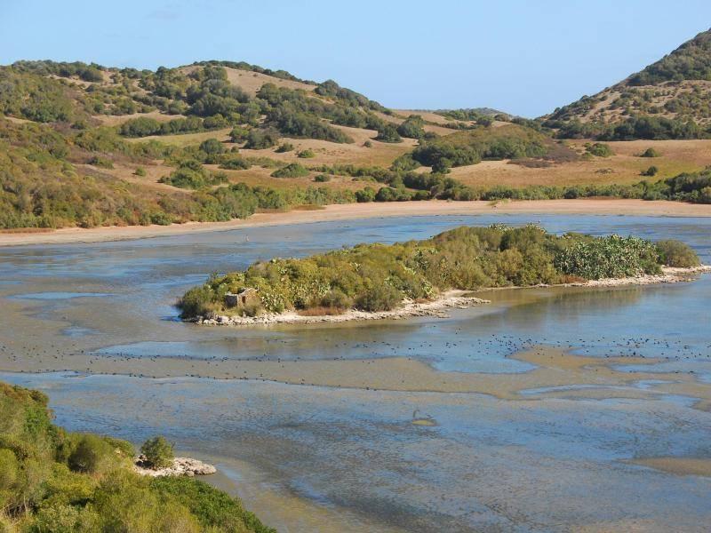Grüne Oase und ein Pflichtstopp für Wanderer auf dem Camí de Cavalls: der Naturpark S'Albufera des Grau mit seiner Lagune