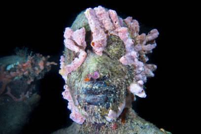 Nach und nach nehmen Meerestiere und -pflanzen Besitz von den Skulpturen und geben ihnen ein völlig anderes Aussehen