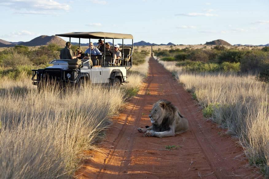 Keine Angst vor großen Tieren, aber vor winzigen Erregern: Safaritouren in Ostafrika werden immer öfter storniert