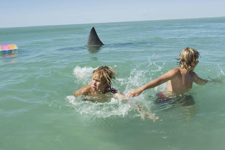 Dieses Foto ist zwar gestellt, doch so ähnlich stellen sich viele Badeurlauber in ihrem schlimmsten Albträumen die Begegnung mit einem Weißen Hai vor