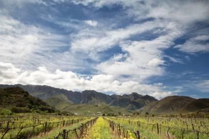 Wein statt wilder Tiere: Südafrika bietet auch Erlebnisse für Gourmets. Hier die Langeberg Mountains, Westkap