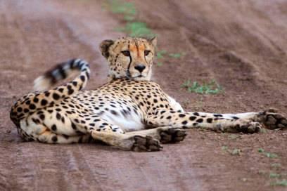 Wegen der respekteinflößenden Wildtiere wie diesem Geparden kommen viele Touristen nach Südafrika – dabei hat das Land noch einiges mehr zu bieten