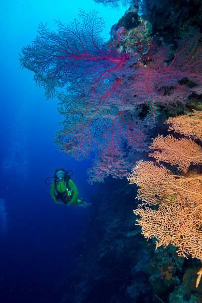 Die Unterwasserwelt von Palau ist ein Traum für Taucher