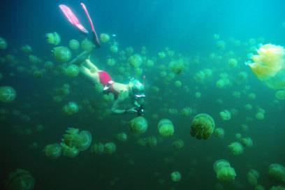 Auf der Insel Eil Malk leben unzählige Quallen im Ongeim'l Tketau, was übersetzt Quallensee bedeutet – zum Glück sind die Tiere für Taucher völlig harmlos