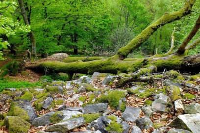 Fast 40 Baumarten gibt es im Nationalpark