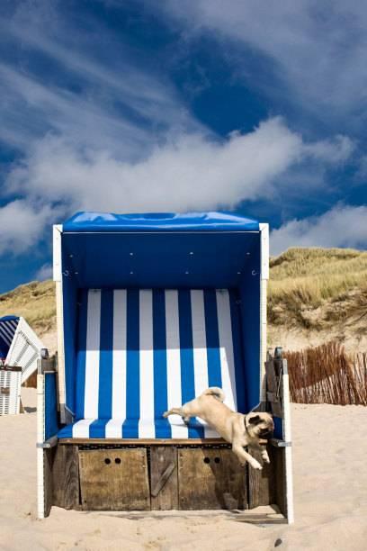 Wenn es am Hundestrand auch Strandkörbe gibt, freuen sich Herrchen oder Frauchen