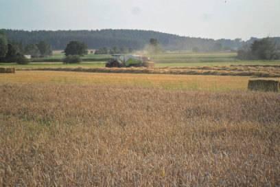 Kornfelder bei Herrieden