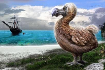 So dürfte der Dodo ausgesehen haben, der 80 Jahre nach seiner Entdeckung auf Mauritius leider ausstarb