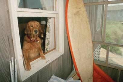 Hunde gehören eher nicht zur Ausstattung, dafür aber in manchen Strandwohnungen: das Surfbrett