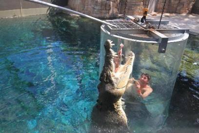 Kaum zu glauben, dass es überhaupt so große Krokodile gibt. Im Käfig des Todes sind sie auch noch zum Greifen nah.