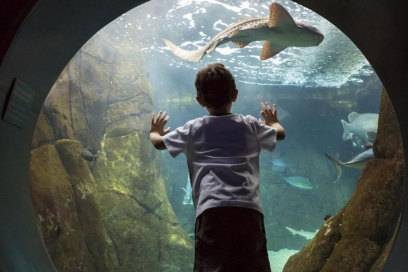 Das Aquarium von Honolulu ist für Familien als Ausflugsziel besonders gut geeignet
