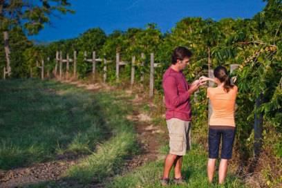 Wer Kaffee mag, ist auf Big Island richtig – und zwar in der Region Kona. Dort gibt es rund 800 Plantagen.