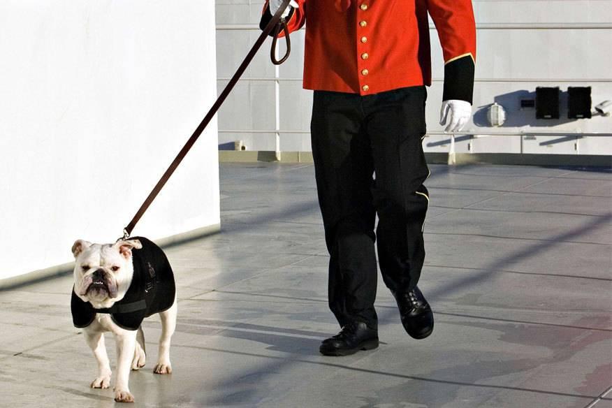 Auf der Queen Mary 2 von CunardLine dürfen auch Hunde mit an Bord