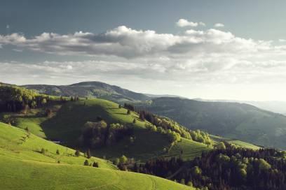 Alles so schön grün hier – kein Wunder, dass Touristen vom Schwarzwald begeistert sind