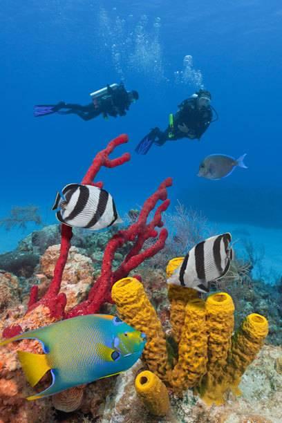 Unter Wasser erwartet Taucher mitunter eine einzigartige Artenvielfalt
