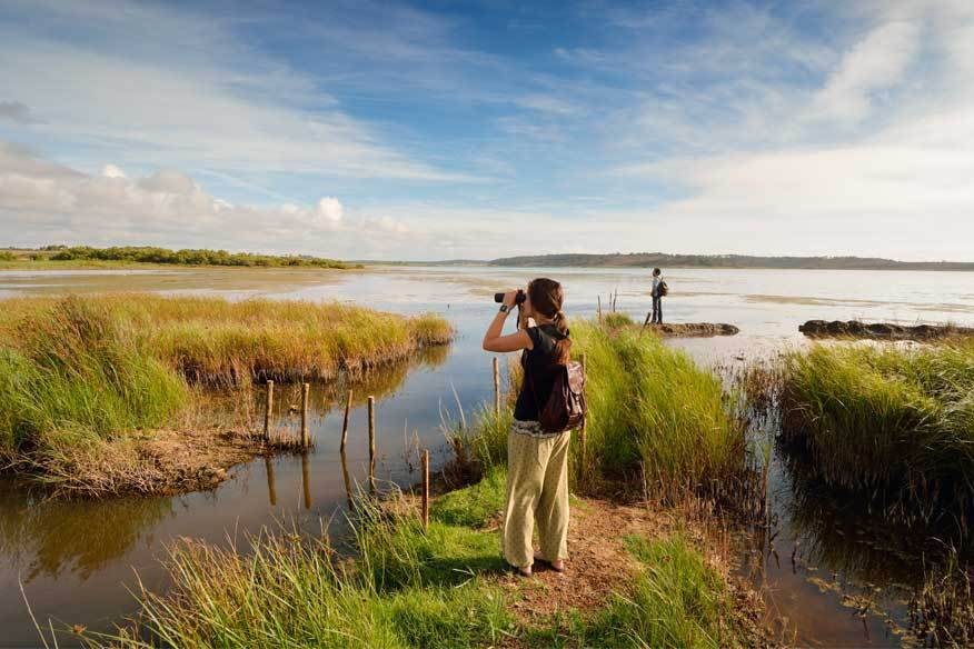 Safari in deutschland! 7 hotspots um tiere in freier natur zu sehen
