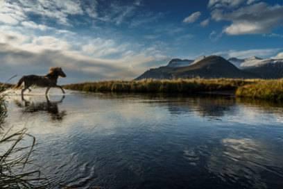 """Nur dann, wenn es Island nicht einmal verlassen hat, darf sich ein Pferd """"Islandpferd"""" nennen"""