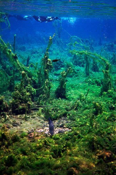 Im Rio Olho d'água ist das Wasser glasklar. Die Sichtweiten in den Gewässern von Bonito betragen bis zu 70 Meter