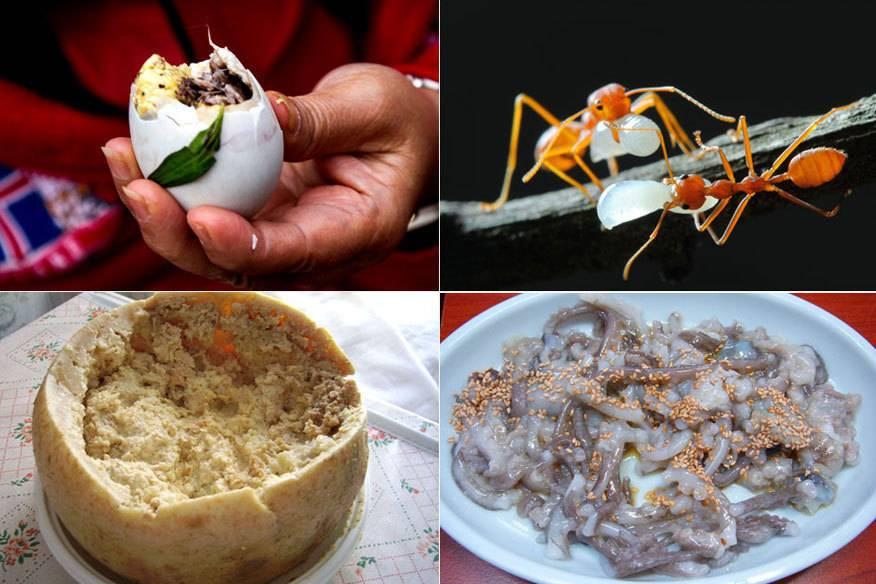 Ein Ei mit einem fast fertigen Küken, Ameisen mit Eiern, von Maden durchsetzter Käse und lebender Tintenfisch: Diese Speisen mag garantiert nicht jeder