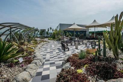 Einen Garten voller Kakteen finden Reisende auf dem Terminaldach des Flughafens Singapur-Changi