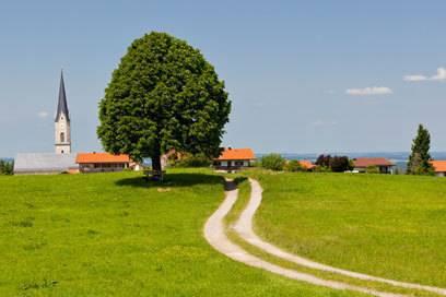 Der Weg führt am Baum vorbei