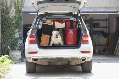 Für viele muss der Hund einfach mit in den Urlaub