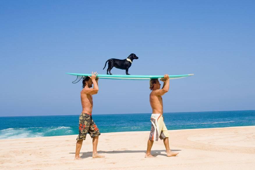 In manchen Urlaubsländern werden Hunde auf Händen getragen. Oder zumindest freundlich in Hotels und Ferienapartments empfangen