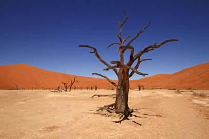Seit über 800 Jahren stehen die von der Sonne ausgebrannten Akazien im Dead Vlei