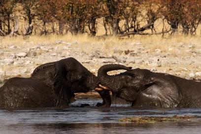 Elefanten nutzen die Wasserlöcher im Etosha-Nationalpark gerne auch mal für ein ausgiebiges Bad