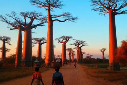 Die Allee der Baobab-Bäume