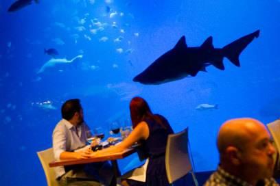 Keine Sorge, der will nur schwimmen: Dinner mit Haien im Aquarium in Palma