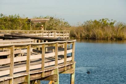 Der Anhinga Trail führt auf Holzstegen durch den Everglades Nationalpark. Benannt ist die Route nach dem Anhinga – einem in den Sümpfen heimischen Vogel.