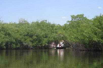 Die meisten Touristen machen Ausflüge in den Everglades mit dem Airboat
