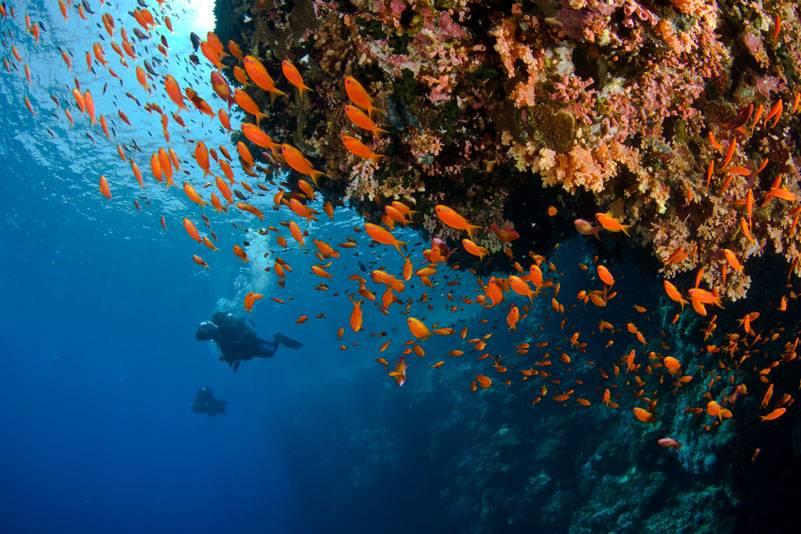 Taucher schätzen die artenreichen Korallenriffe des Roten Meeres. Die Reviere rund um Sharm el Sheikh haben eine gute Wasserqualität. Im Ras-Mohammed-Nationalpark stehen sie unter Naturschutz