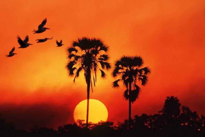 Eine Tour durch das artenreiche Okavango-Delta ist ein unvergessliches Erlebnis. Wenn die Sonne wie eine riesige Scheibe hinter den Horizont fällt und Vögel ihre Bahnen durch das Abendrot ziehen, könnte man sich fast im Paradies wähnen
