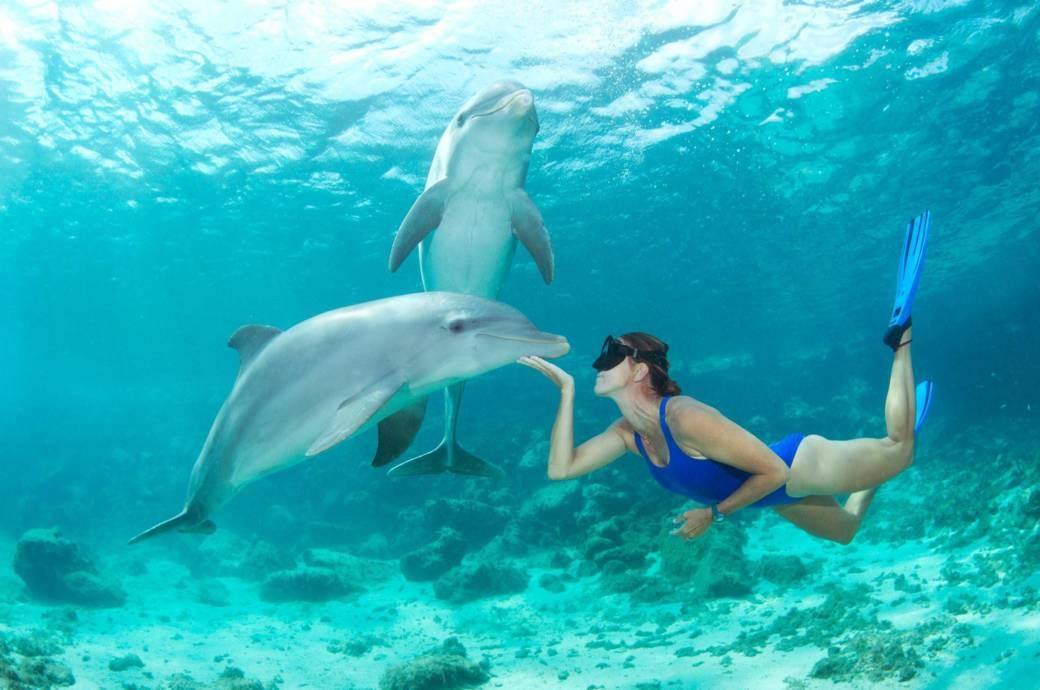 Einem Deflin in freier Wildbahn zu treffen – oder gar mit ihm zu schwimmen – ist für viele ein unvergessliches Erlebnis