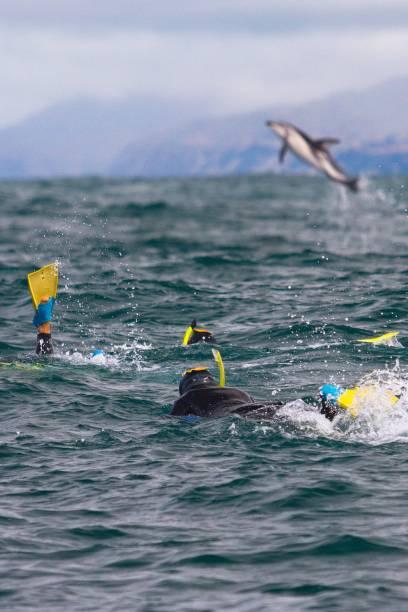Mit Schnorchel und in kompletter Taucher-Montur, nur eben ohne Sauerstoff-Flasche, kann man in Kaikoura zusammen mit Delfinen schwimmen