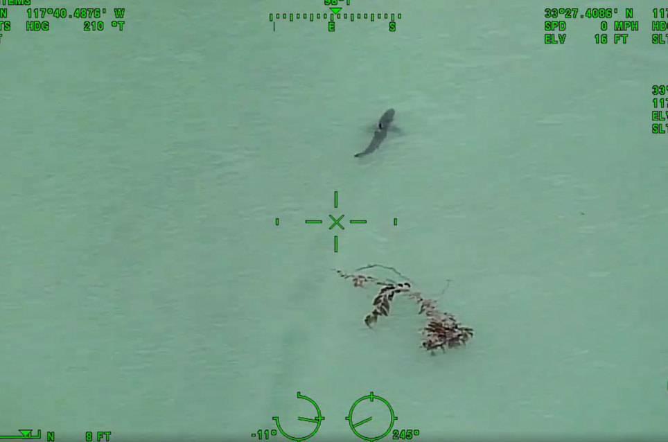 """Polizei zu Paddler: """"Gehen Sie aus dem Wasser, es sind 15 Weiße Haie in Ihrer Nähe!"""""""