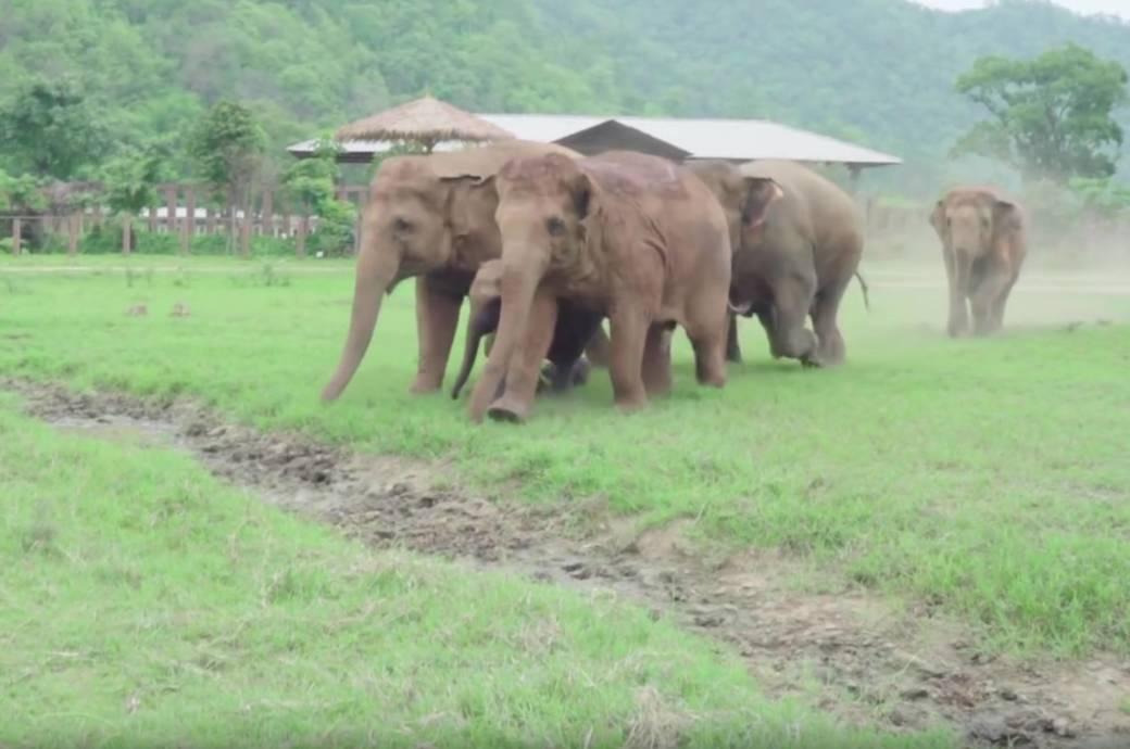 Herde rennt los, um Baby-Elefant zu retten! Dieses Video wird dein Herz erwärmen
