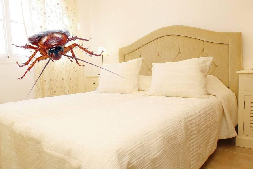 Hotelgäste müssen im Zimmer mit Tieren rechnen, die in ihrer Urlaubsregion verbreitet sind, etwa Kakerlaken