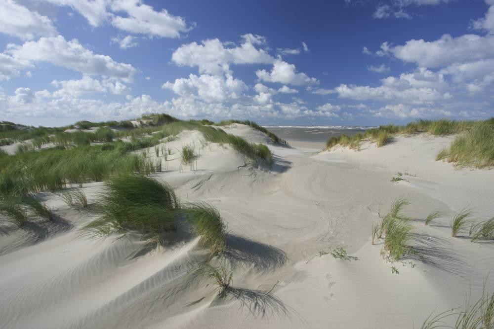 Sanddünen auf Spiekeroog
