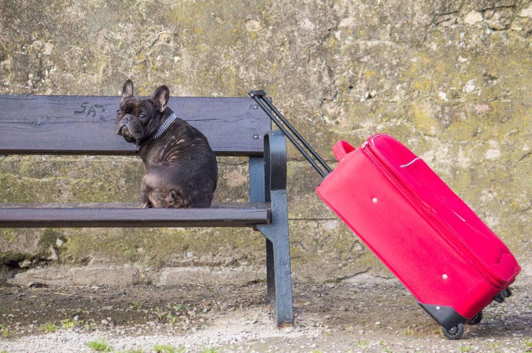 Hund Koffer Reise