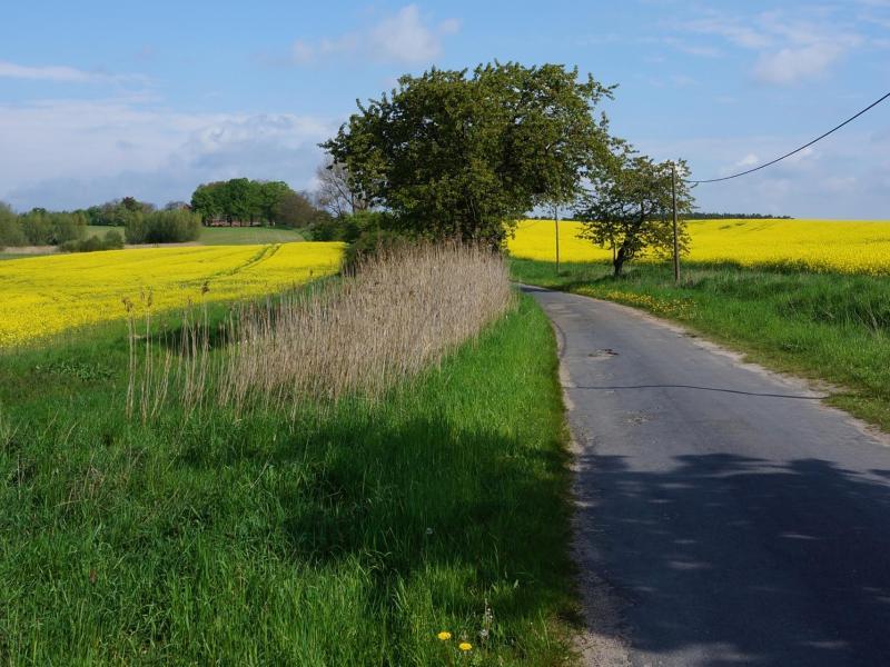 Radweg in der Uckermark