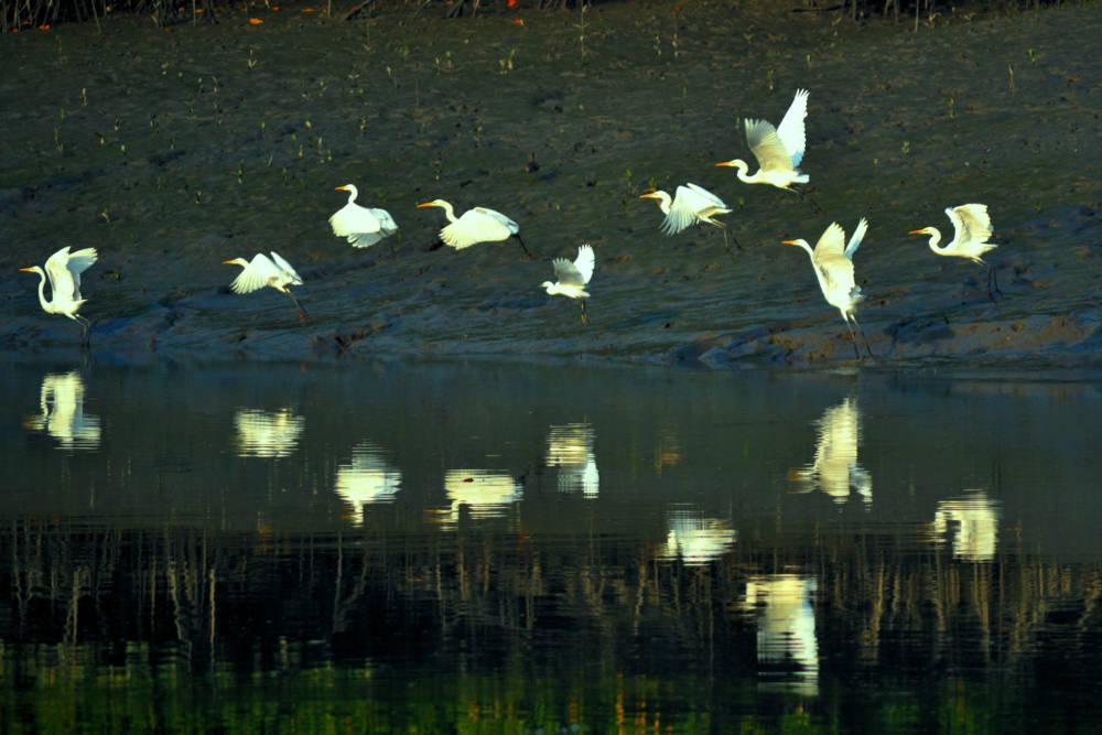 gefährdete UNESCO-Welterben, Sundarbans-Nationalpark