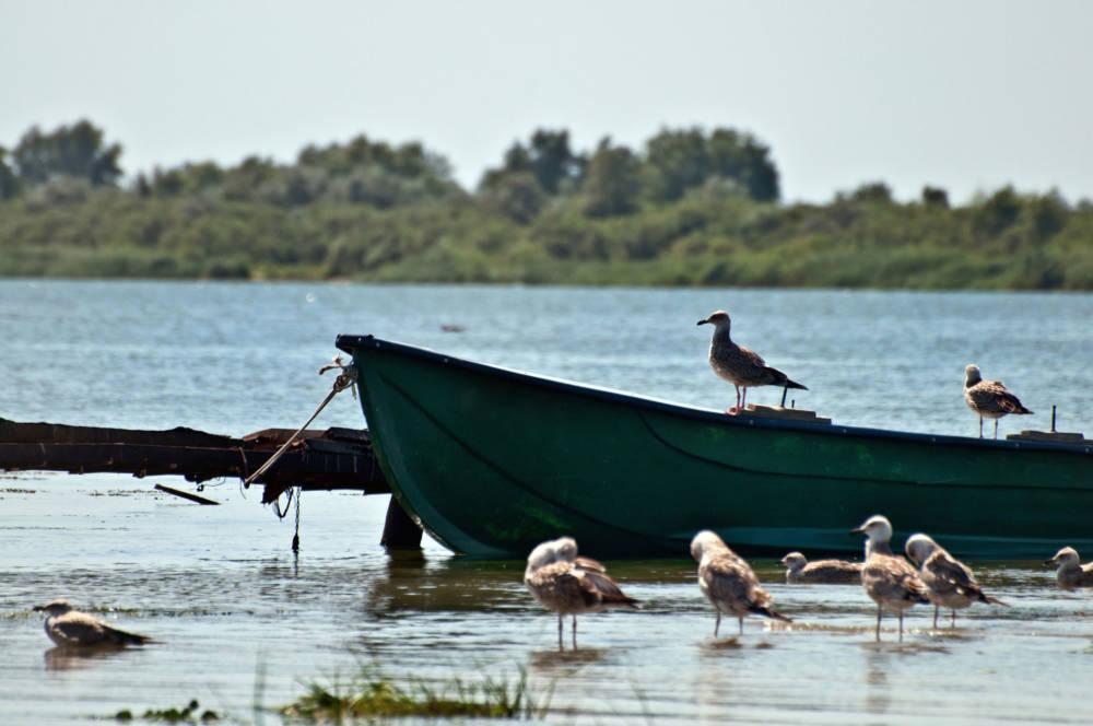 gefährdete UNESCO-Welterben, Donaudelta