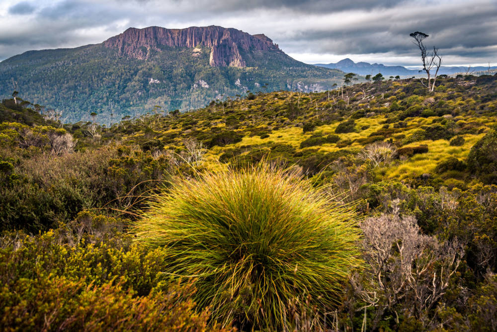 gefährdete UNESCO-Welterben, Tasmanien