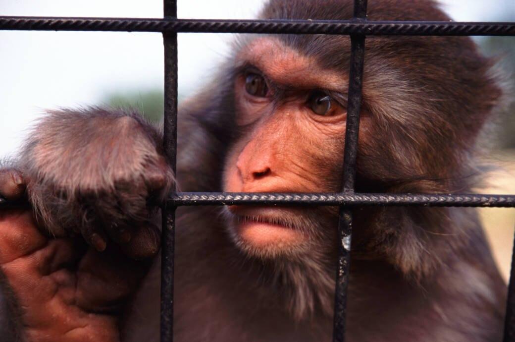 Tiere im Zoo Kritik