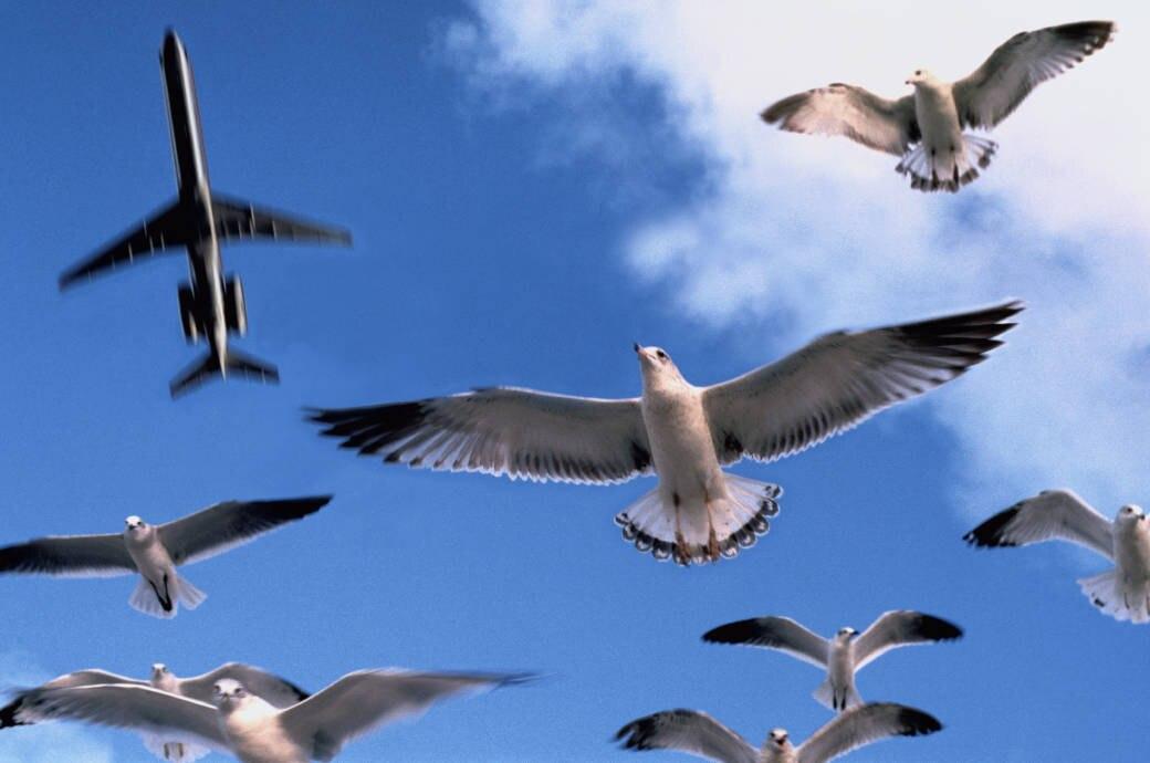 Möwen fliegen unter einem Flugzeug