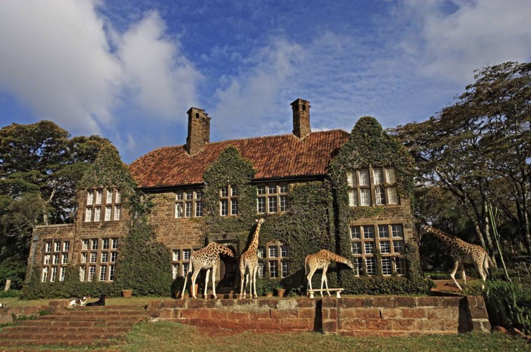 """Im kenianischen """"Giraffe Manor"""" kann es schon mal vorkommen, dass eine Giraffe ihren Kopf durch das Zimmerfenster steckt"""